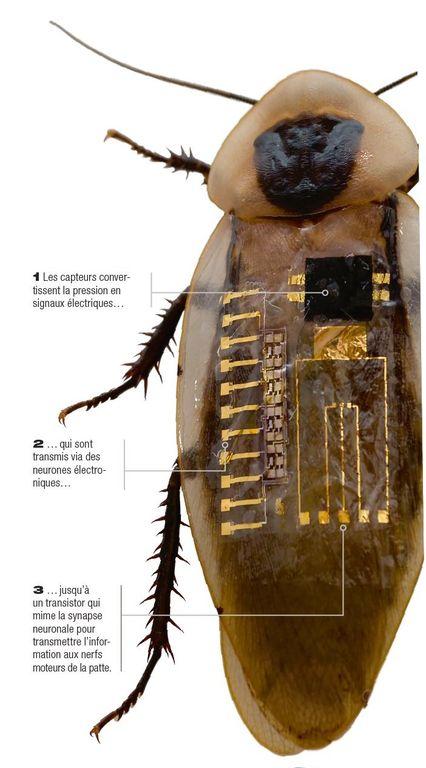 Des nerfs artificiels peuvent imiter notre système sensoriel